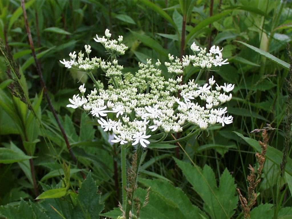 Ontario Wildflowers List