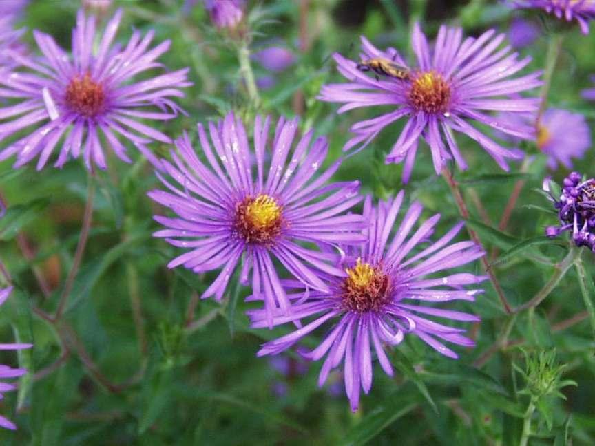 Redpink wildflowers mightylinksfo